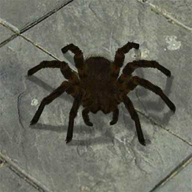384x384 Pictures Scary Spider,