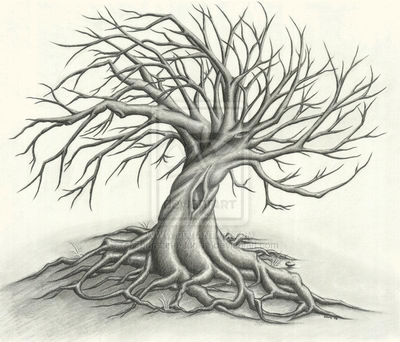 800x684 Tree Drawing Tattoo