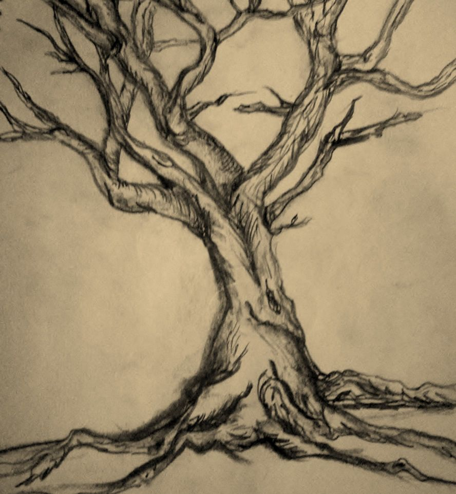 888x962 Pencil Sketch Of Old Big Tree Pencil Drawings