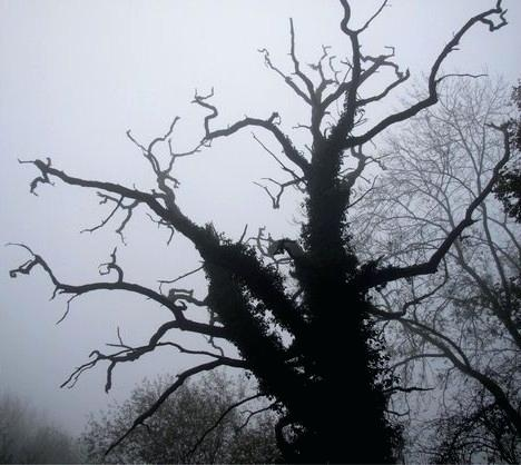 468x418 Scary Tree Scary Tree Scary Tree Drawing Expatworld.club