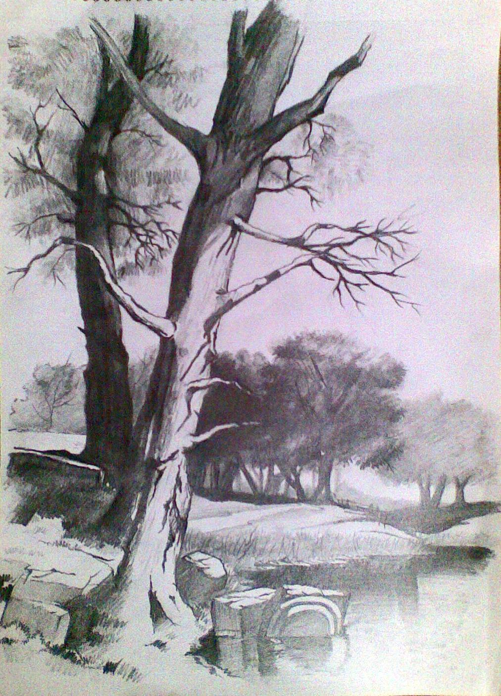 1012x1406 Art Scenery Pencil Sketches Pencil Drawings Of Fall Scenes Hd
