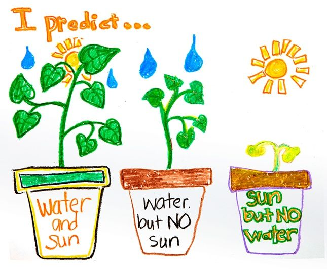 645x532 What Do Plants Need To Grow Draw Predictions And Results