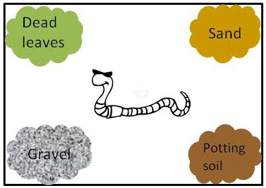 388x274 Squirmy Wormy Which Soil Type Do Earthworms Like Best