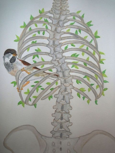 480x640 Inquisitive Bird, Crooked Tree Scoliosis, Scoliosis Surgery