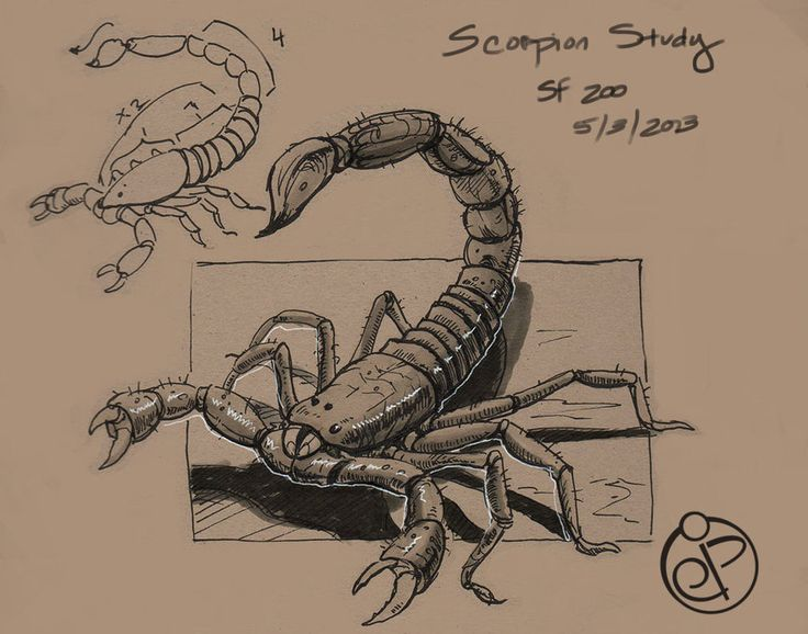 736x578 18 Best Scorpion Images On Scorpion, Scorpio And Insects
