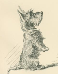 242x308 Antique Dog Print, Scottish Terrier By Lucy Dawson