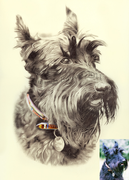 518x722 Jack The Scottie Dog