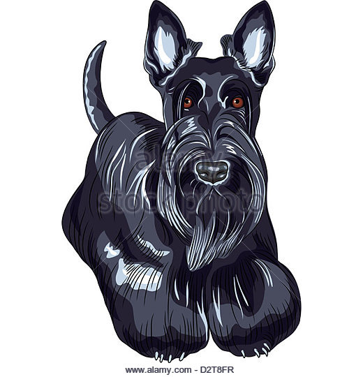 520x540 Scottie Dog Drawing Stock Photos Amp Scottie Dog Drawing Stock