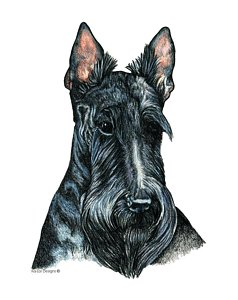 238x300 Scottie Dog Drawings Fine Art America