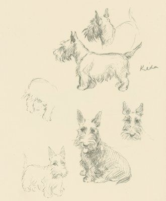 330x399 This Original Antique Scottie Dog Print, Is From A Series Of Well