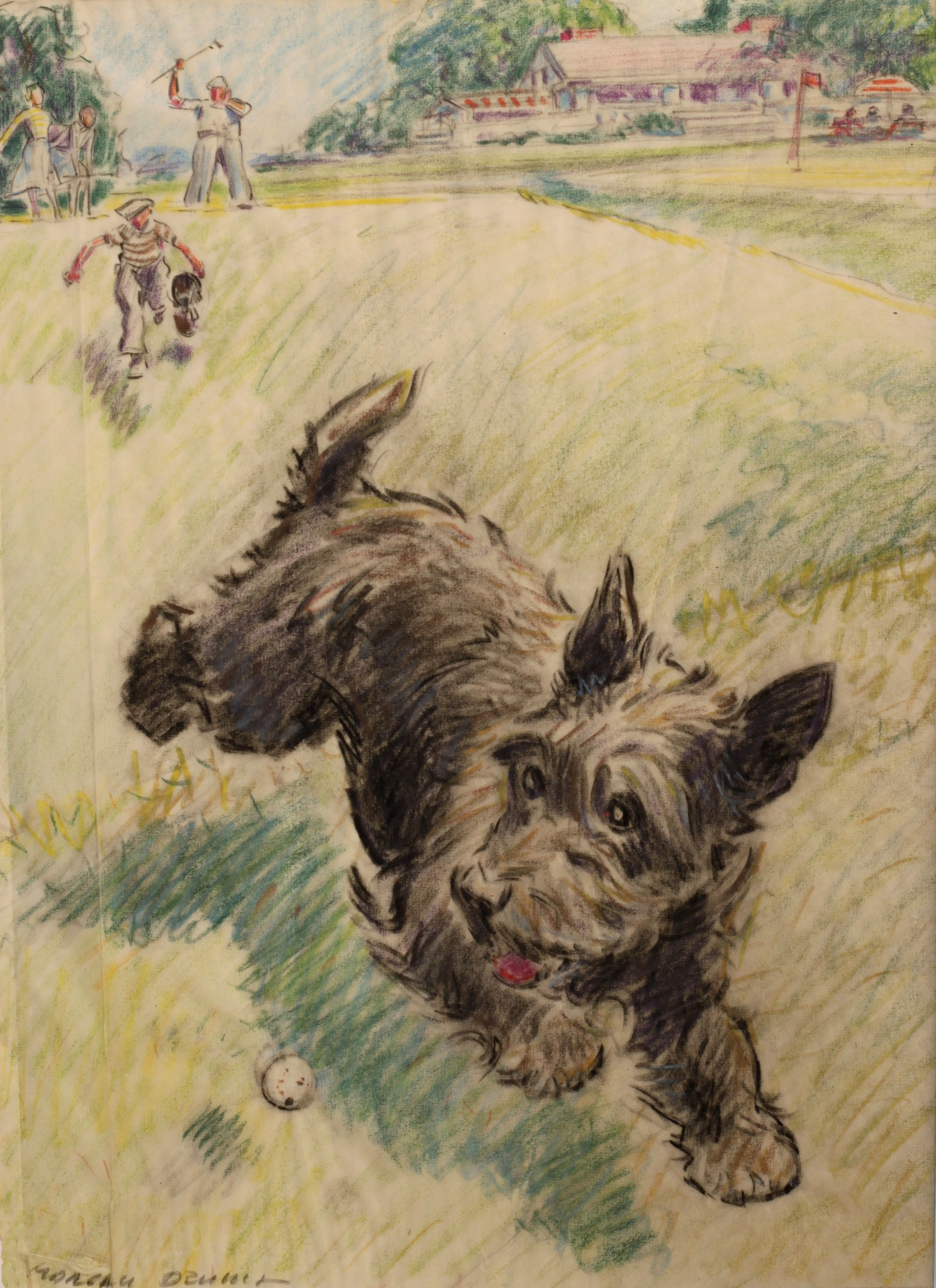 1607x2210 Coloured Pencil Drawing Of Scottish Terrier Chasing A Golf Ball By