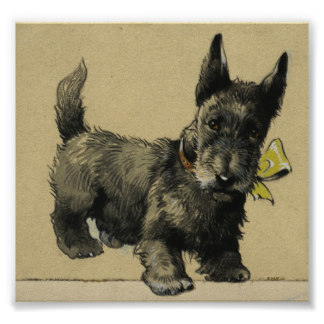 324x324 Scottish Terrier Drawing Gifts On Zazzle