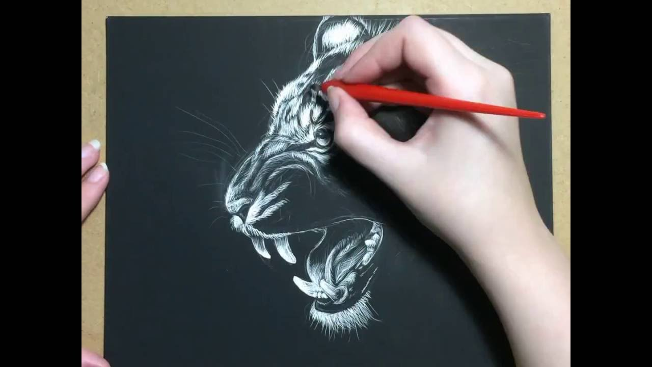 1280x720 Tiger Scratchboard Drawing Time Lapse Art