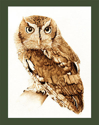 395x500 Eastern Screech Owl Drawing By Cate Mccauley