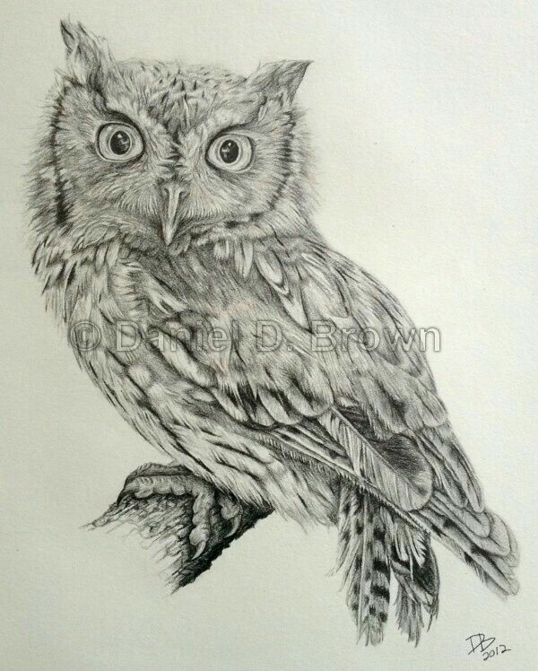 600x748 Pin By Susan Carrell On Owl Sketches Owl, Owl Art