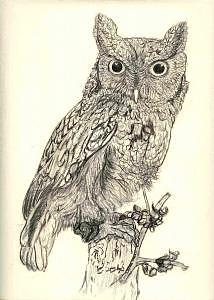 214x300 Screech Owl Drawing By Debra Abell