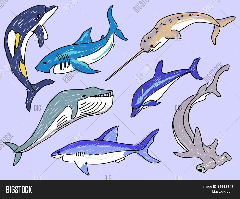 1500x1245 Sea Animals Simple Drawing Vector Vector Amp Photo Bigstock