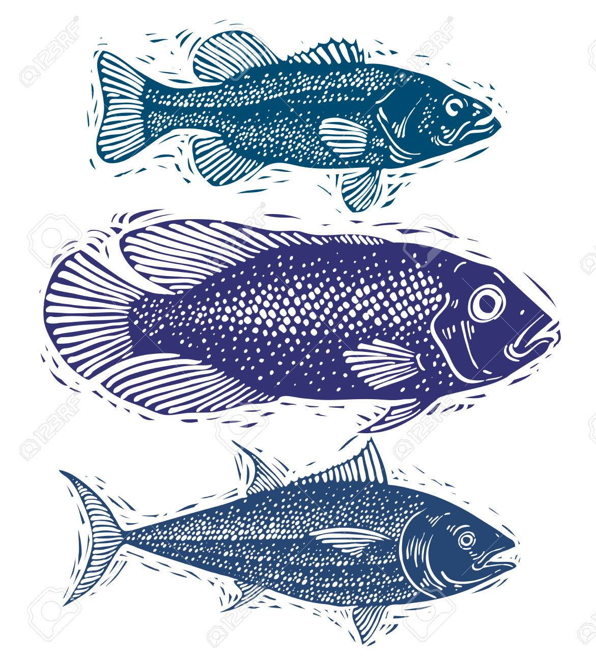 1171x1300 Set Of Vector Fishes, Different Underwater Species. Organic