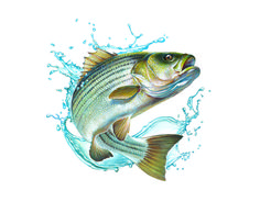 236x194 Bluegill Drawing Sources Been There, Done That Just Because