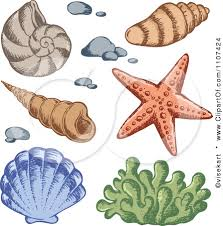 Attractive 223x226 Image Result For Sea Coral Drawings Art Pinterest Draw