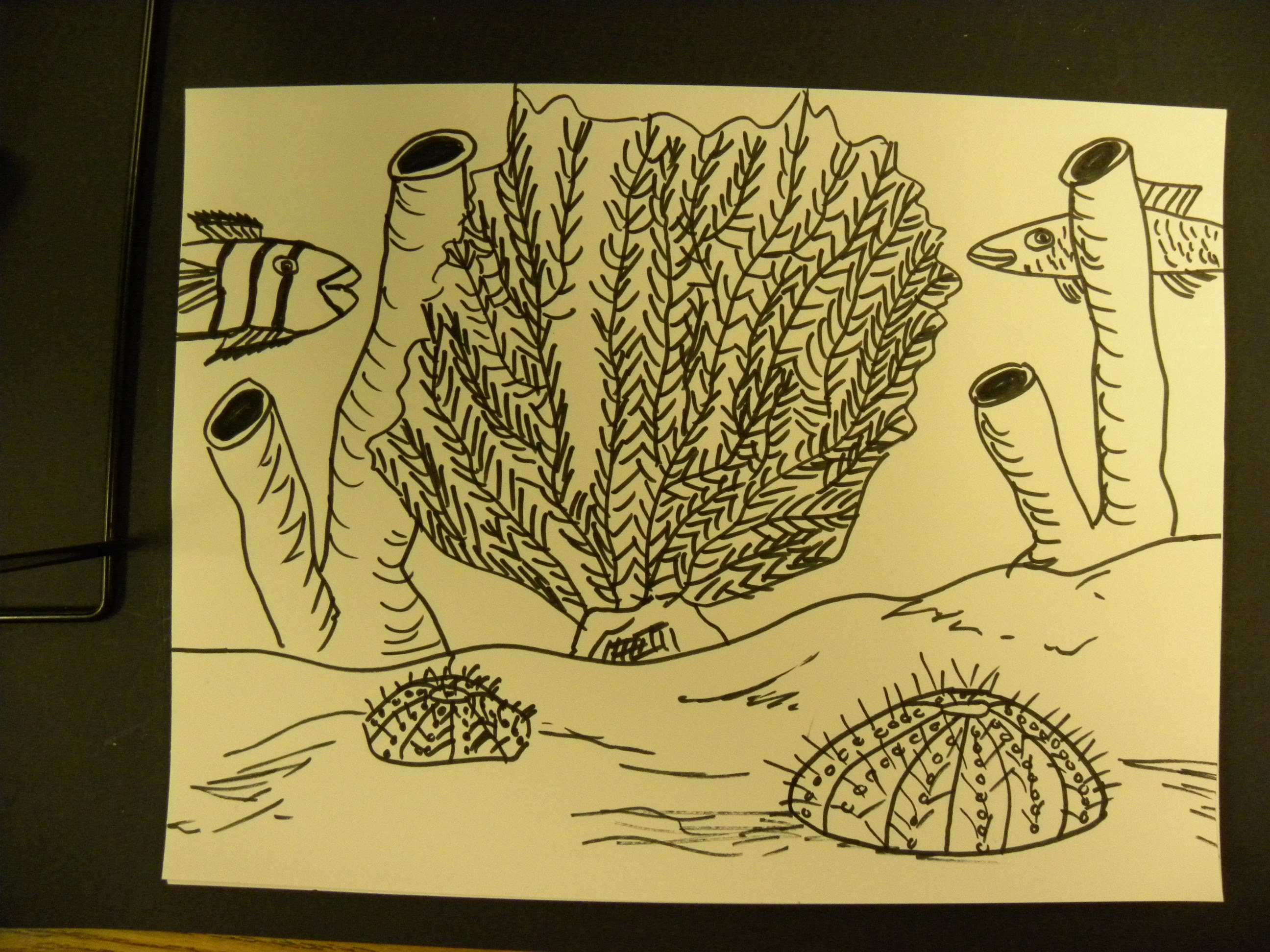Sea Coral Drawing at GetDrawings.com | Free for personal use Sea ...