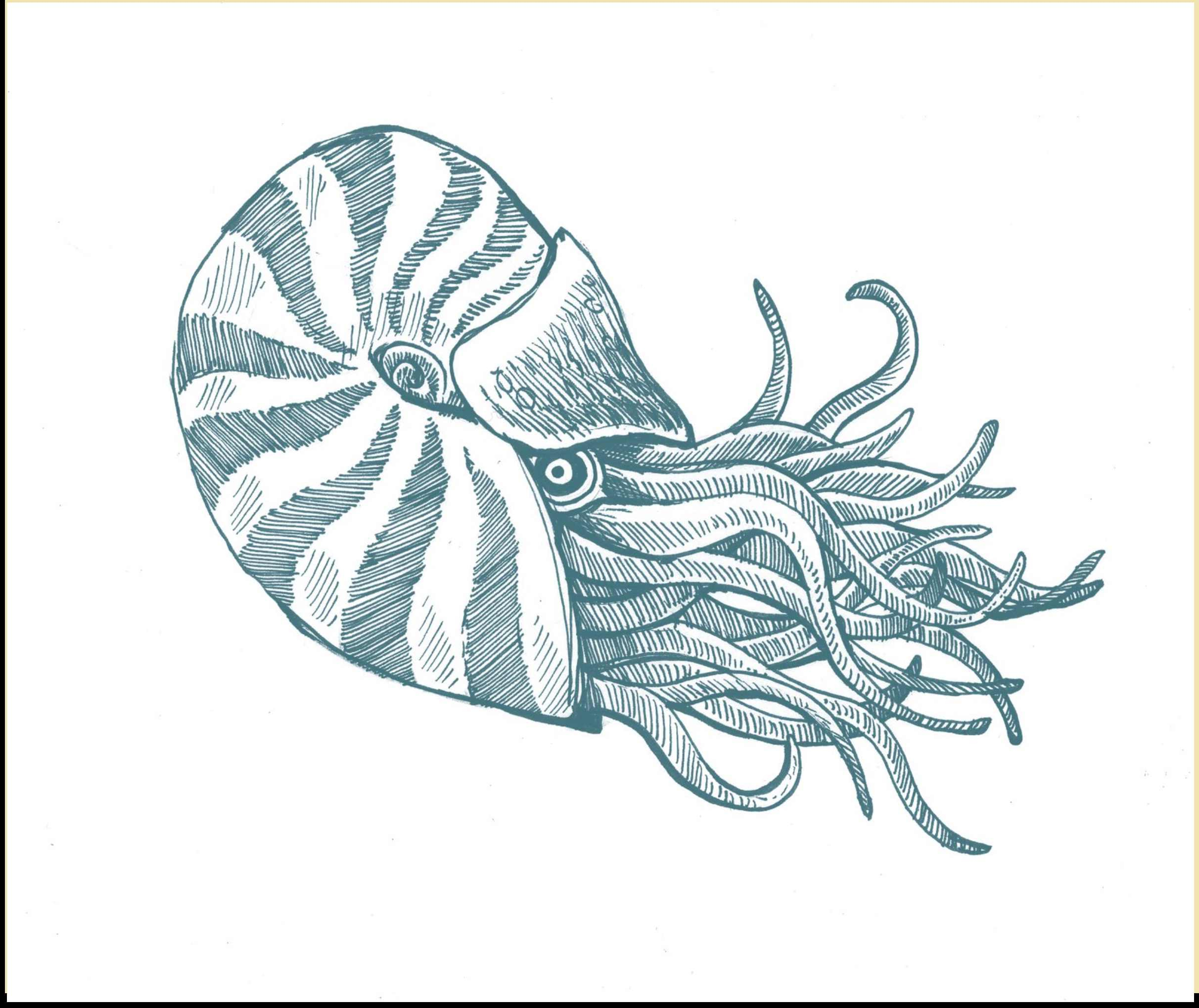 Sea Creature Drawing at GetDrawings.com | Free for personal use Sea ...