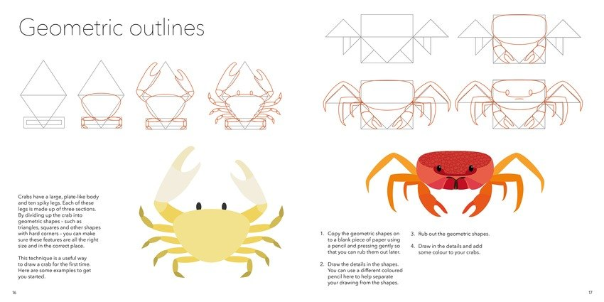 how to draw sea life