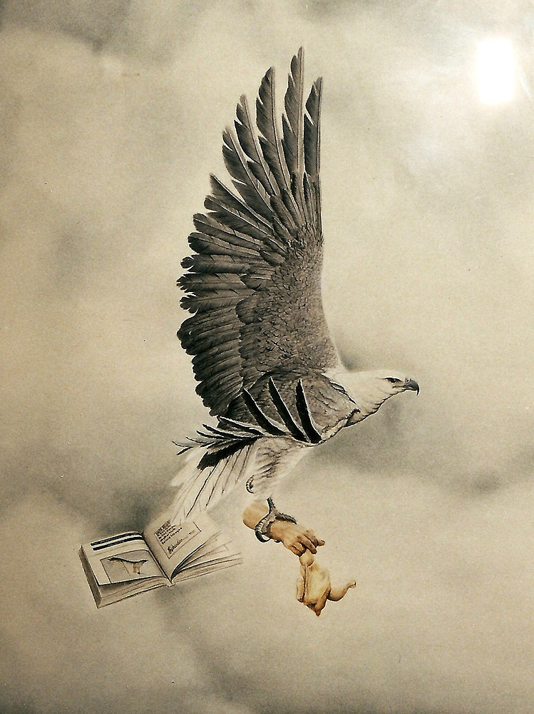 749x1000 White Bellied Sea Eagle (Haliaeetus Leucogaster) By Elizabeth
