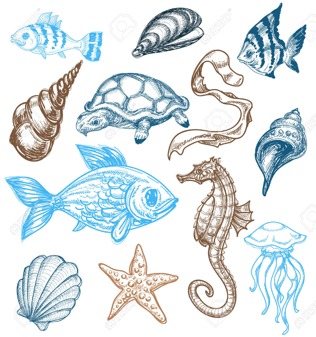 Sea Fish Drawing at GetDrawings.com | Free for personal ...