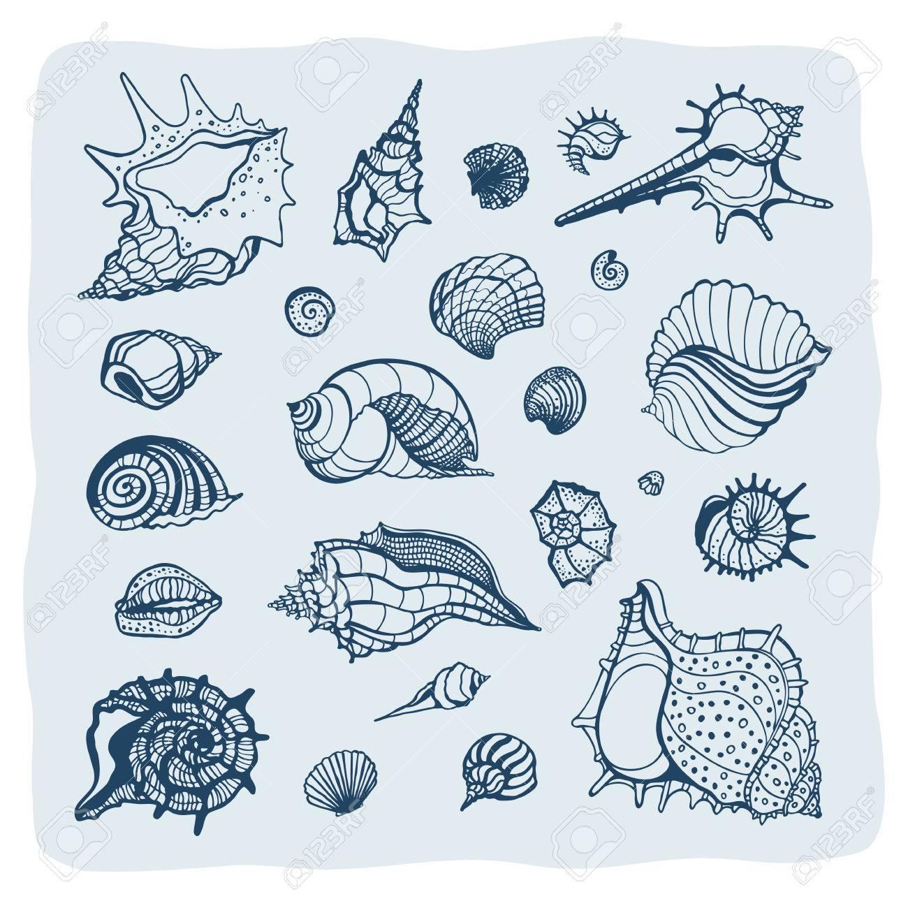 1300x1300 Collection Of Seashells. Hand Drawn Vector Illustration. Sea