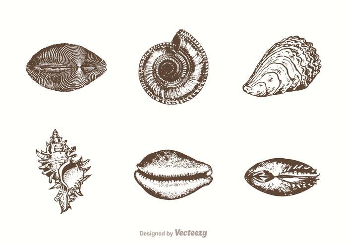 700x490 Free Hand Drawn Sea Shells Vector