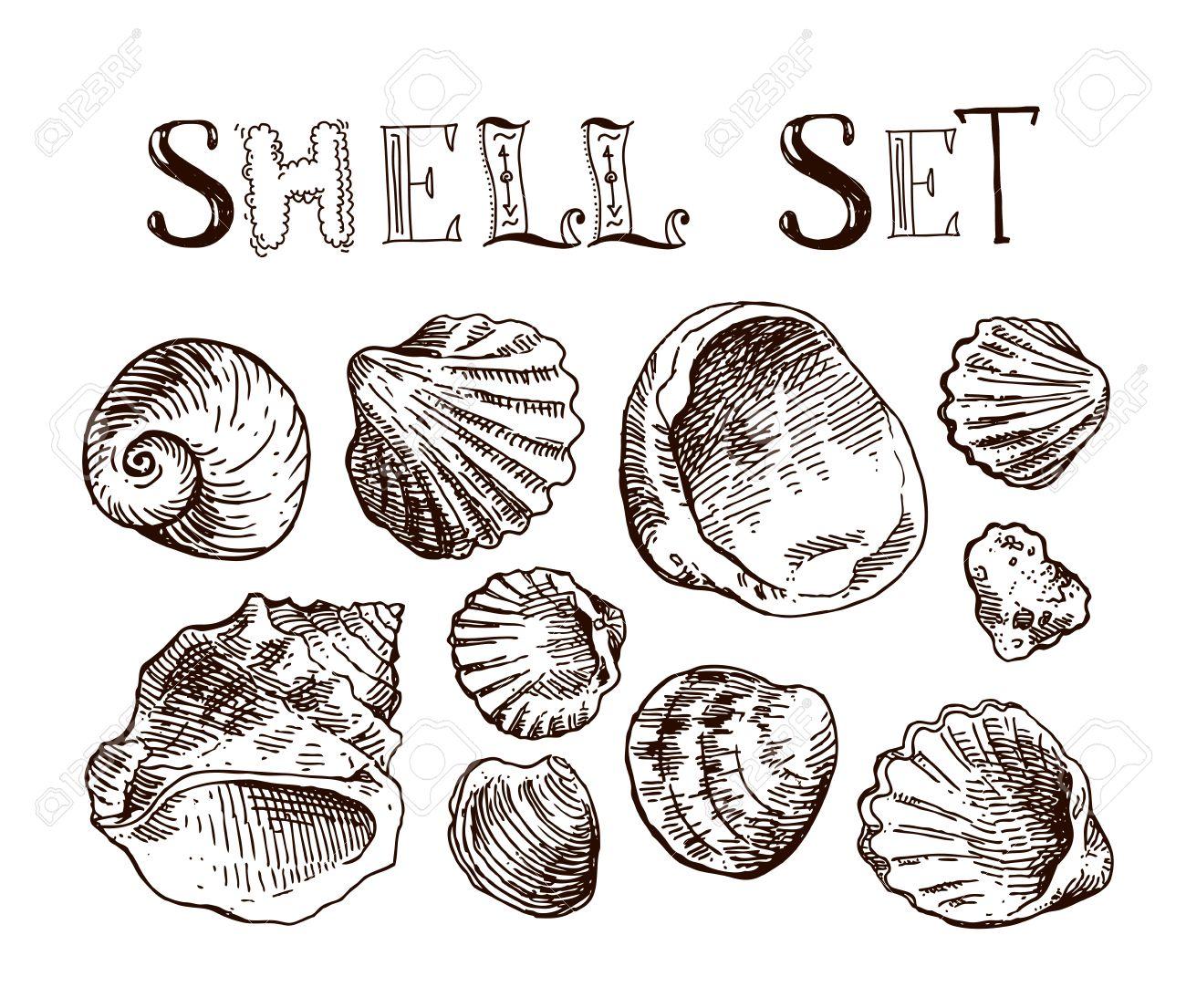 1300x1105 Hand Drawn Sea Shell. Set Of Sketches Shells. Shell Illustration