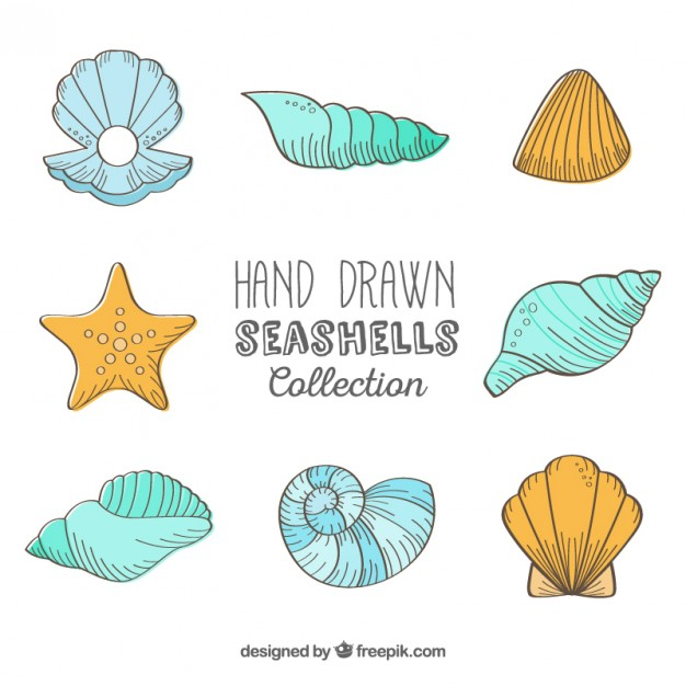 626x626 Hand Drawn Seashells Collection Vector Free Download