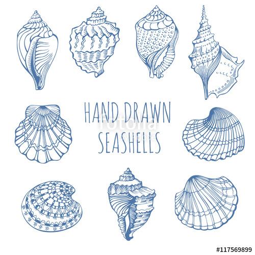 500x500 Seashells. Rapana. Black Sea Clam, Holiday, Marine Life. Hand