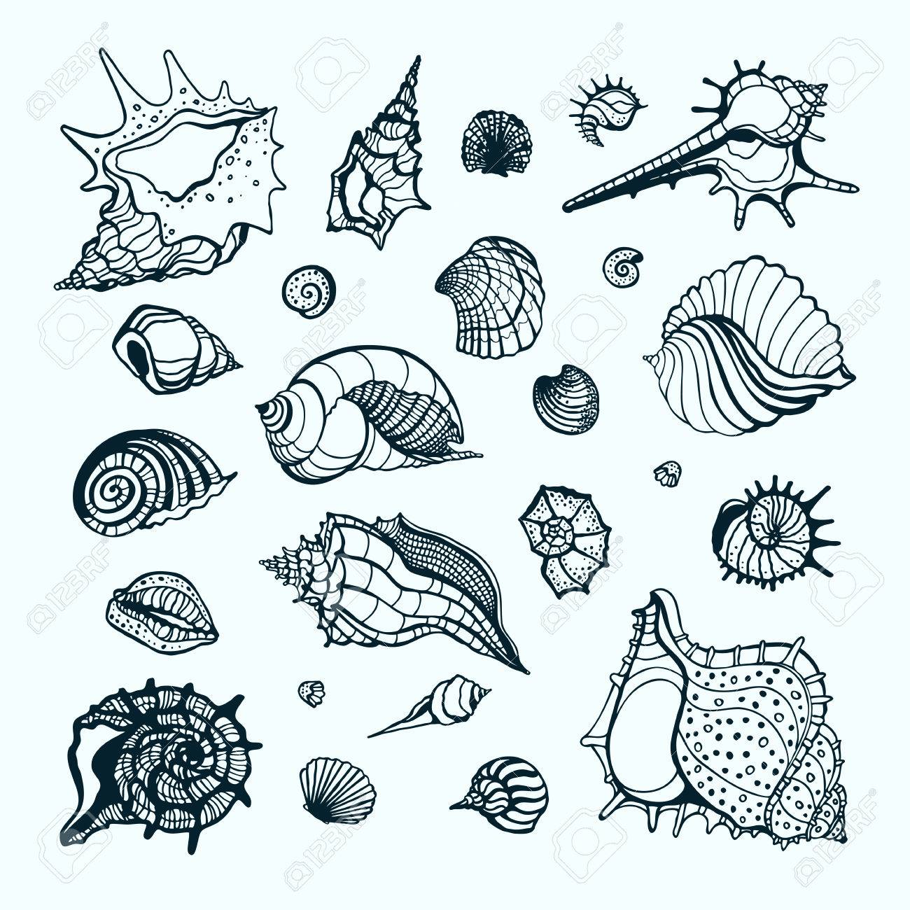 1300x1300 Set With Various Sea Shells. Vector Hand Drawn Illustration