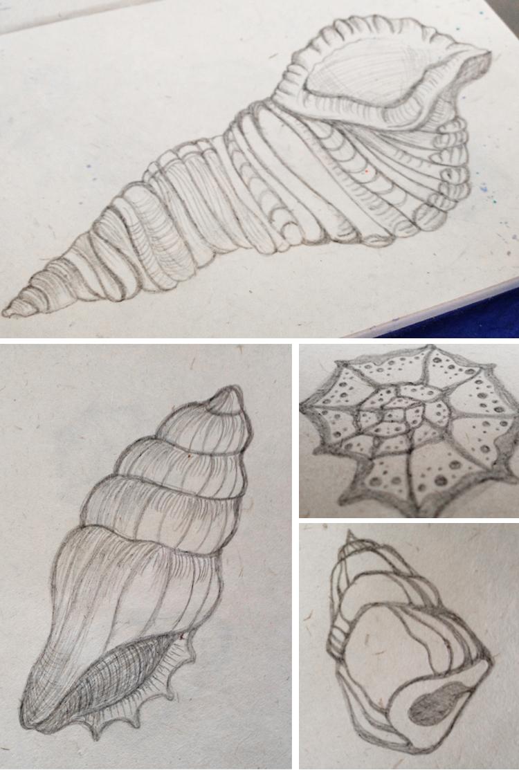 750x1113 Seashells Hand Drawn Sketch Conch Shells Www.radworkss