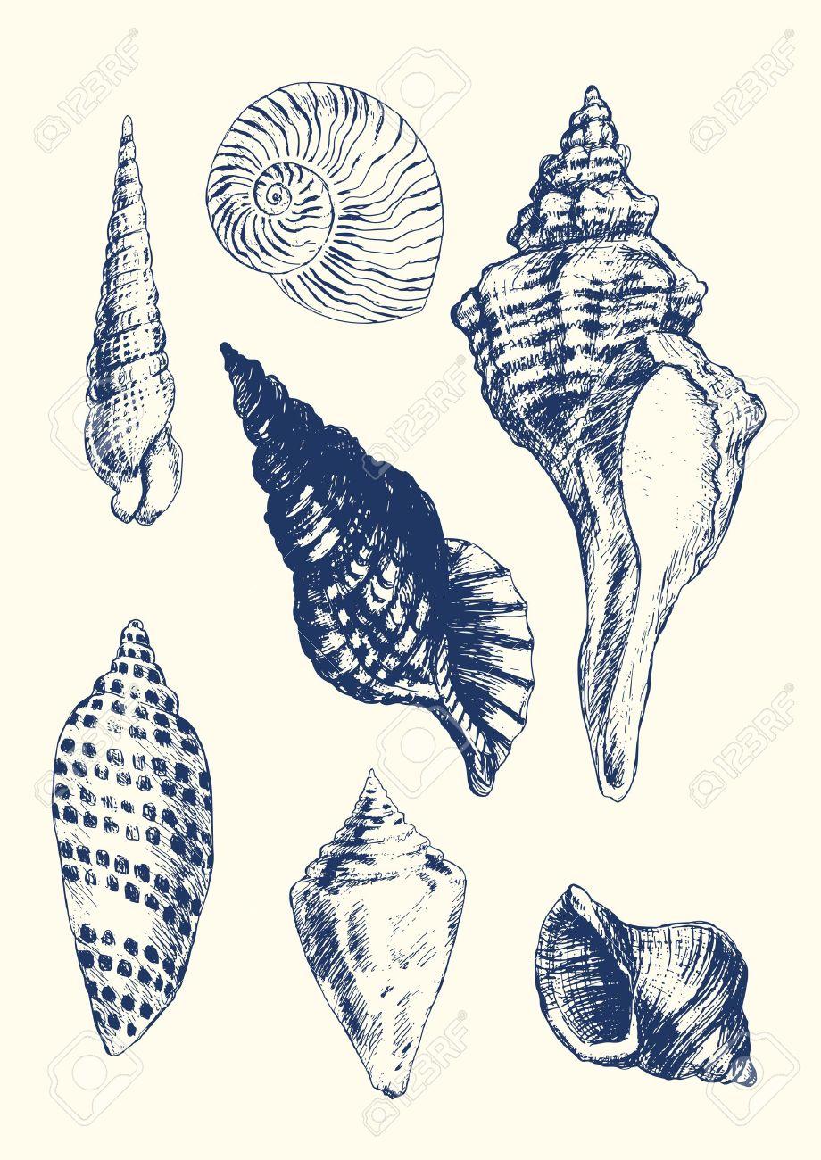 920x1300 Shell Illust