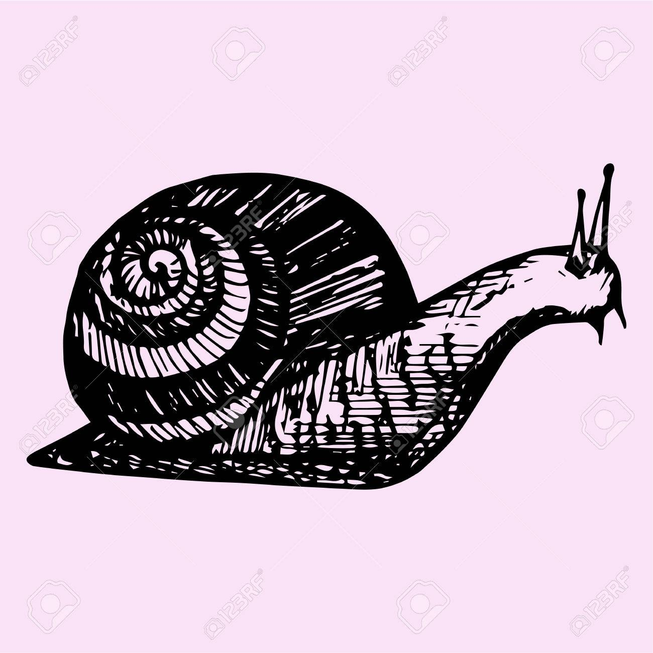 1300x1300 Snail, Hand Drawn, Doodle Style, Sketch Illustration Royalty Free