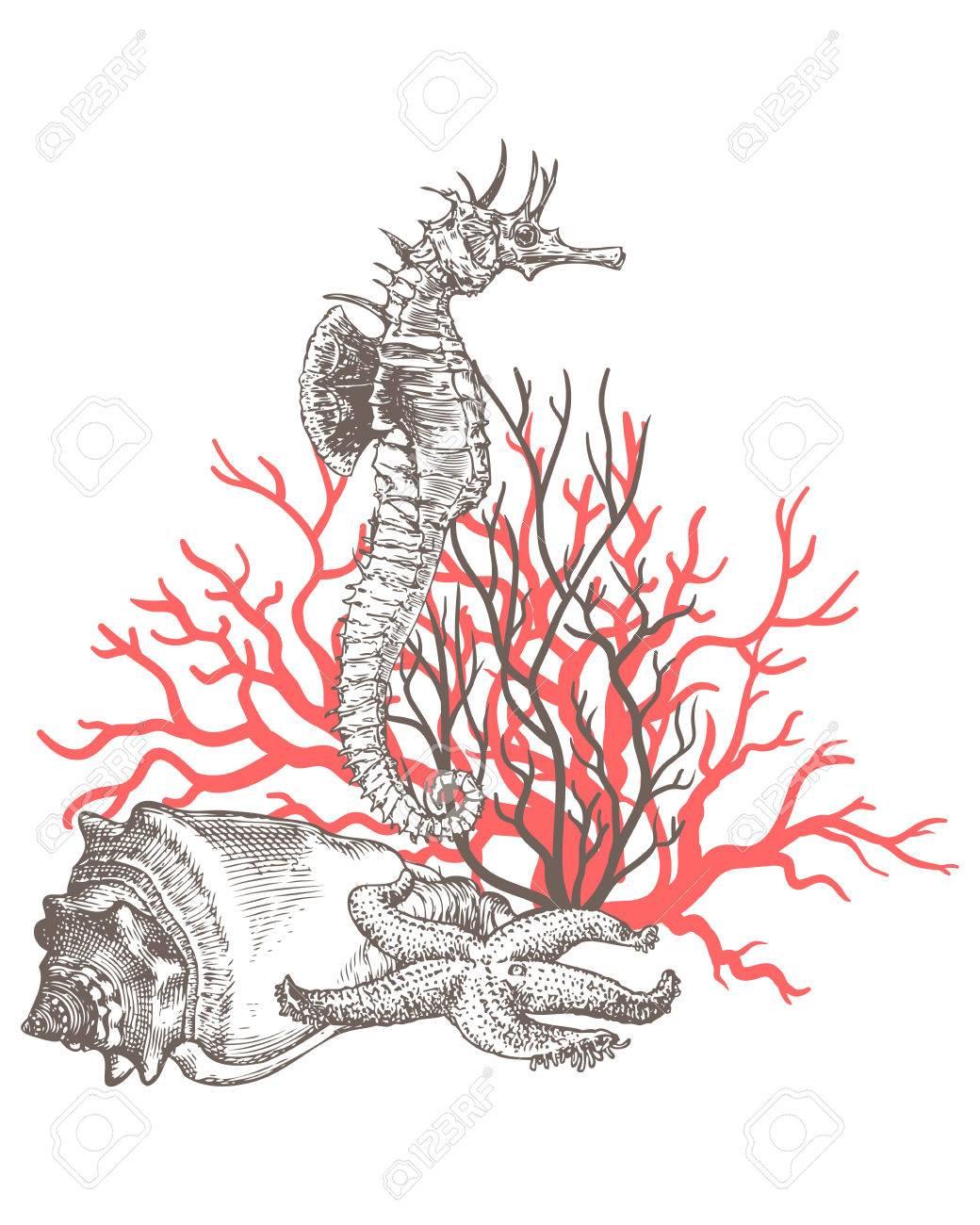 1040x1300 Corals, Sea Dragon, Sea Horse, Sea Shell, Sea Star Royalty Free
