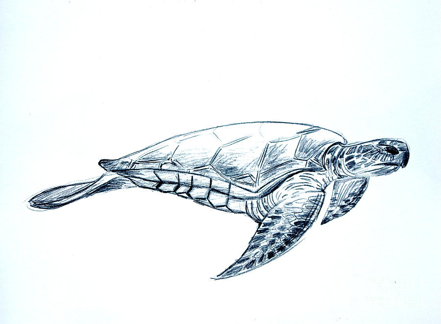 sea turtle drawing at getdrawings com free for personal use sea