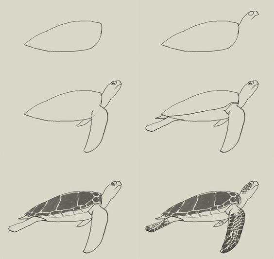 how to draw a sea turtle realistic