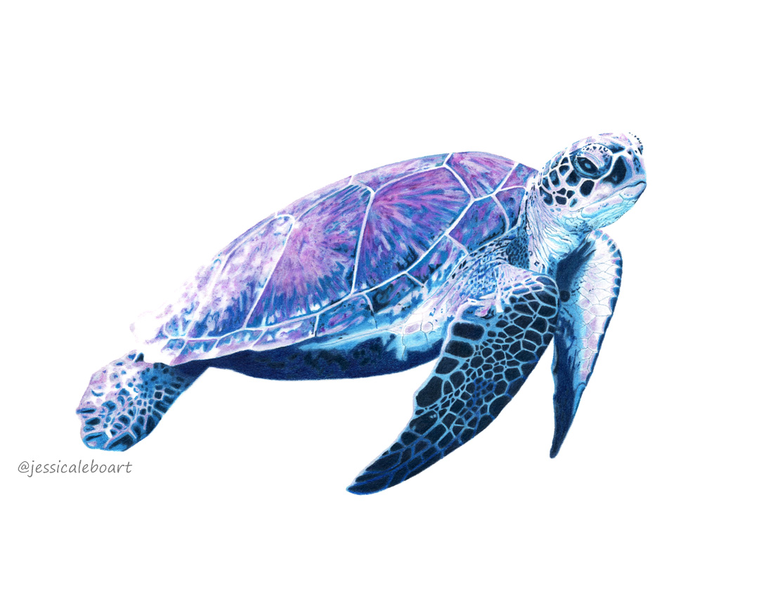 Sea Turtle Drawing Color At Getdrawings Com Free For