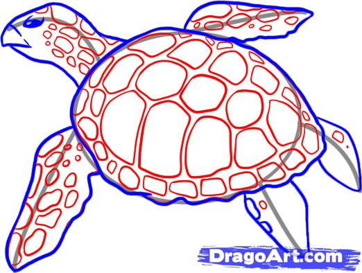 Sea Turtle Drawing For Kids At Getdrawings Com Free For Personal