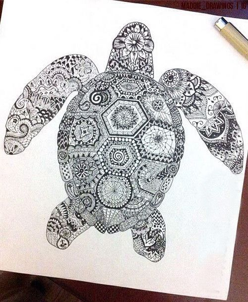 500x609 17 Best Turtle Images On Turtles, Sea Turtles And Zen