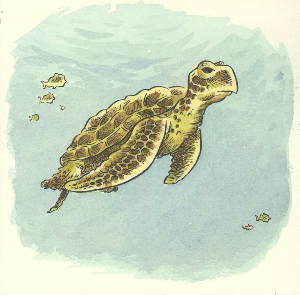 1000x984 S Is For Sea Turtle Ben Towle Cartoonist, Educator, Hobo