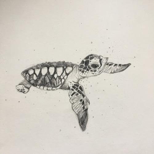 500x500 Cute Baby Sea Turtles Tumblr