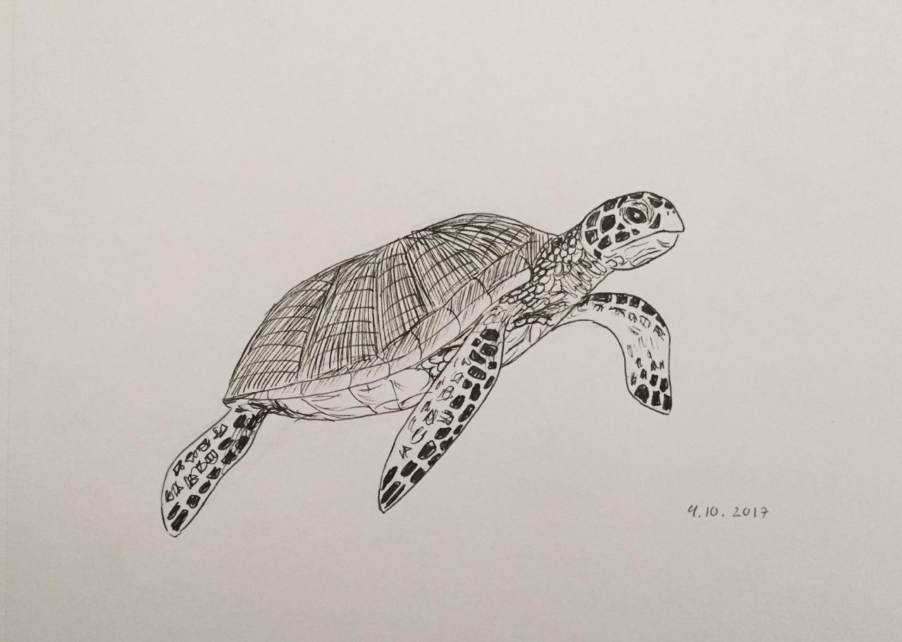 1280x912 I Draw Sometimes Inktober Day 4 Underwater