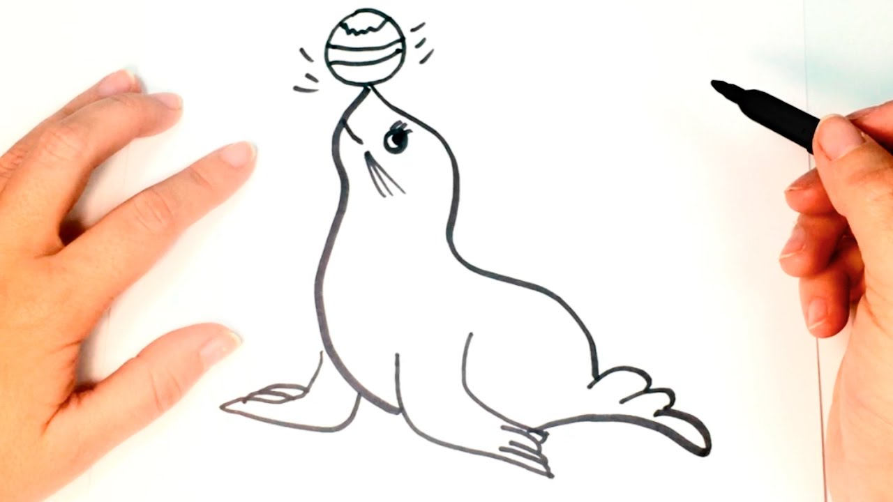 1280x720 How To Draw A Seal For Kids Seal Drawing Lesson Step By Step