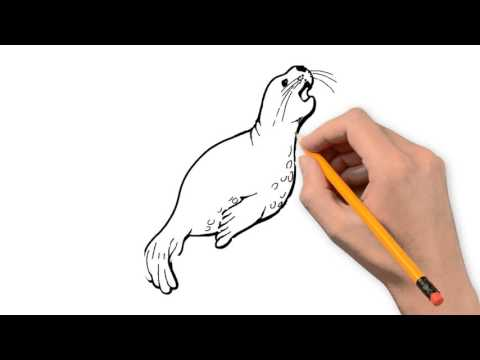 480x360 Seal Animals Pencil To Draw Step By Step
