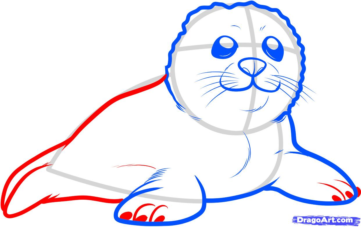 1242x780 How To Draw A Seal Pup, Seal Pup Step 5 Lanni Pup